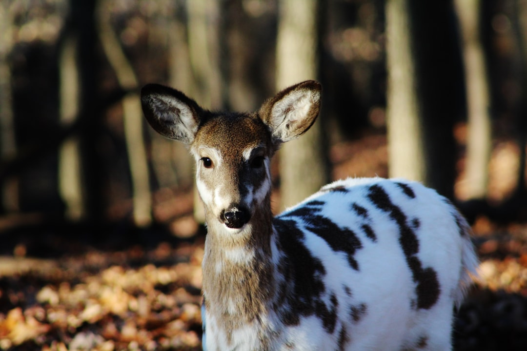 Deer Animal Doe And Fawn Hd Photo By Charles Ray