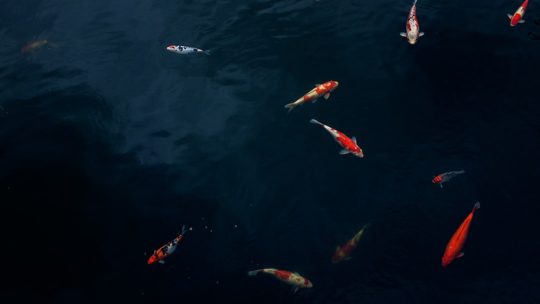 Water fish koi and pond hd photo by alice mourou for Koi pond hd