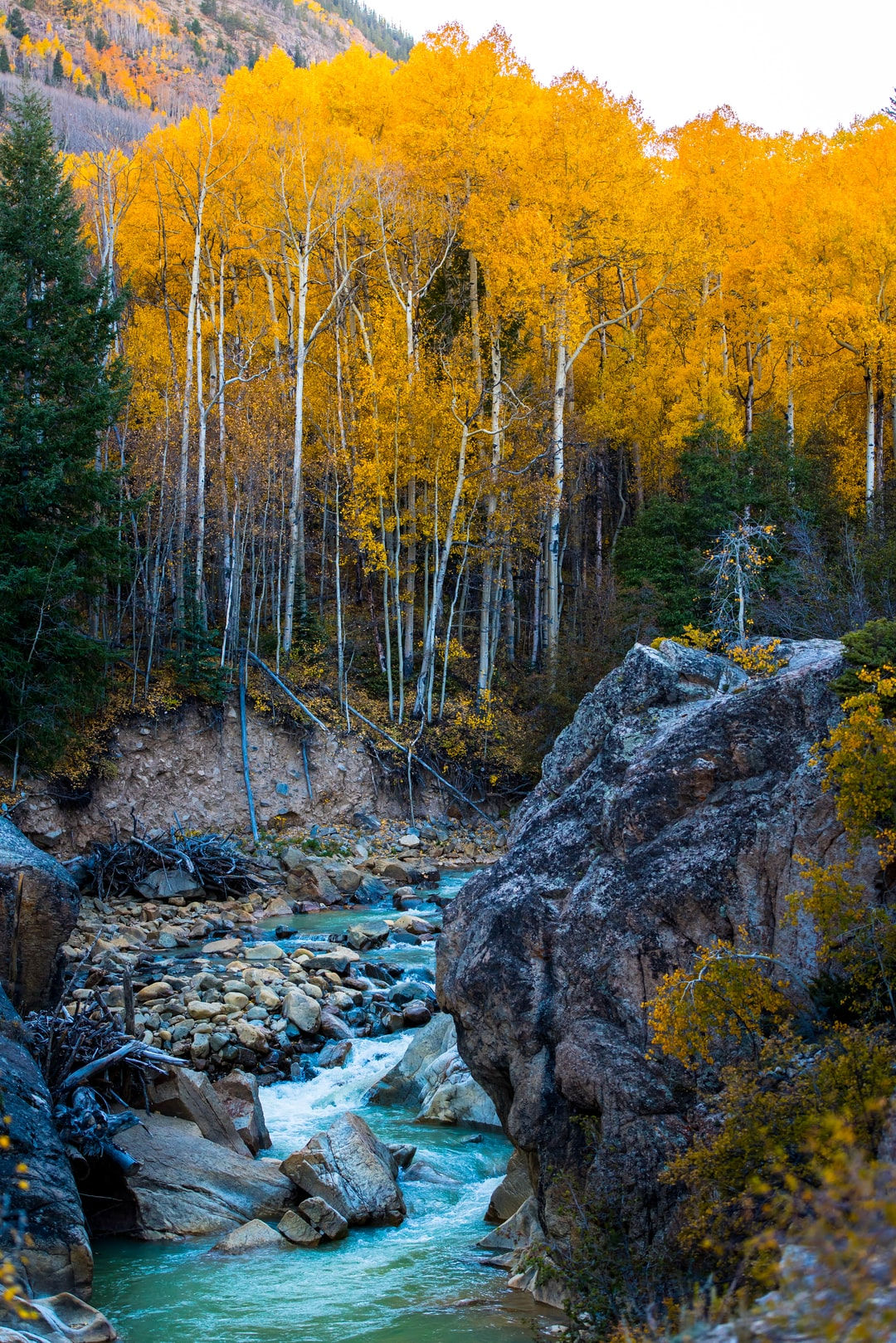 Rock tree fall and autumn hd photo by nathan anderson nathananderson on unsplash - Tree images free download ...