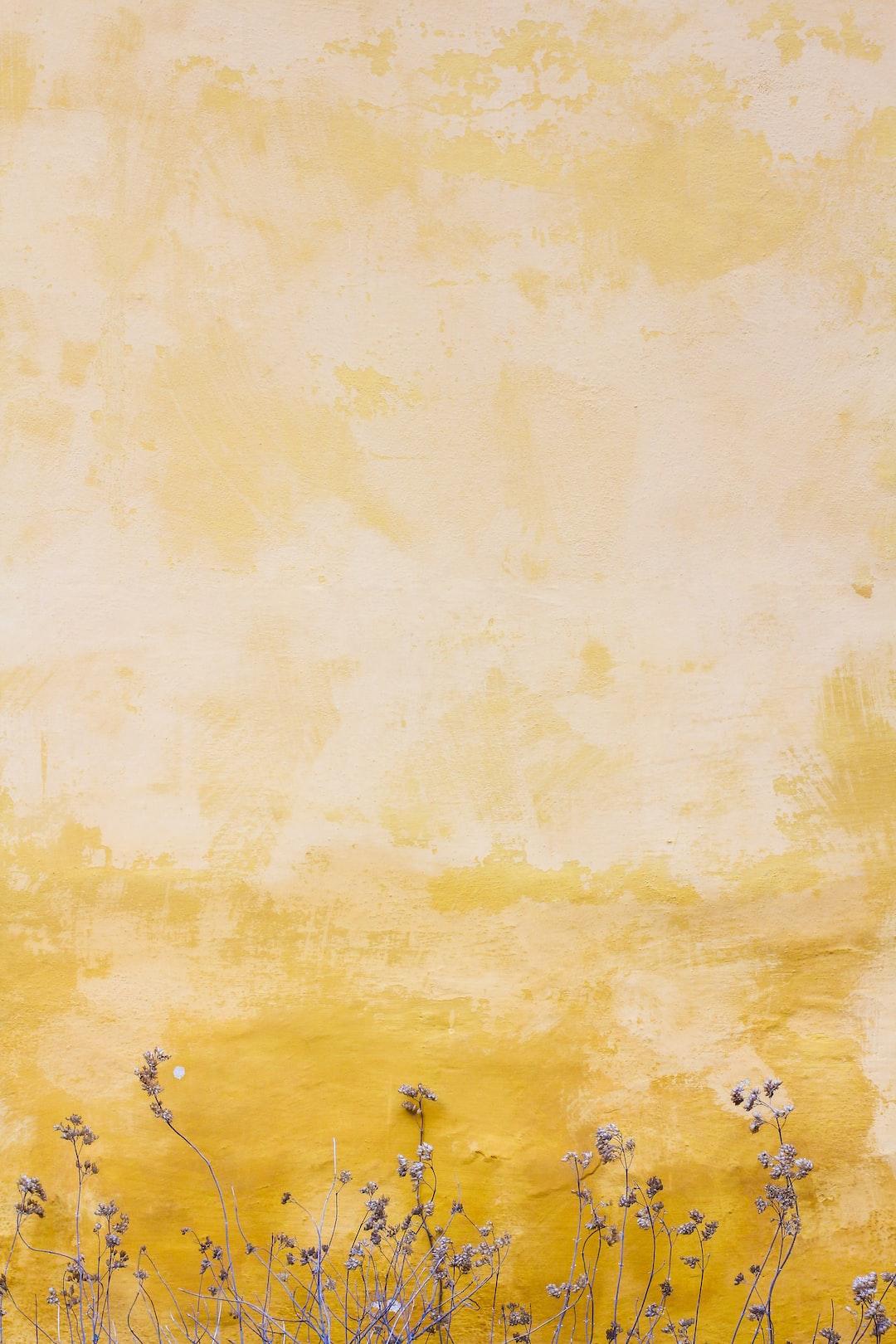 Yellow Wallpapers Free Hd Download 500 Hq Unsplash Blue and yellow aesthetic wallpapers wallpaper cave. unsplash