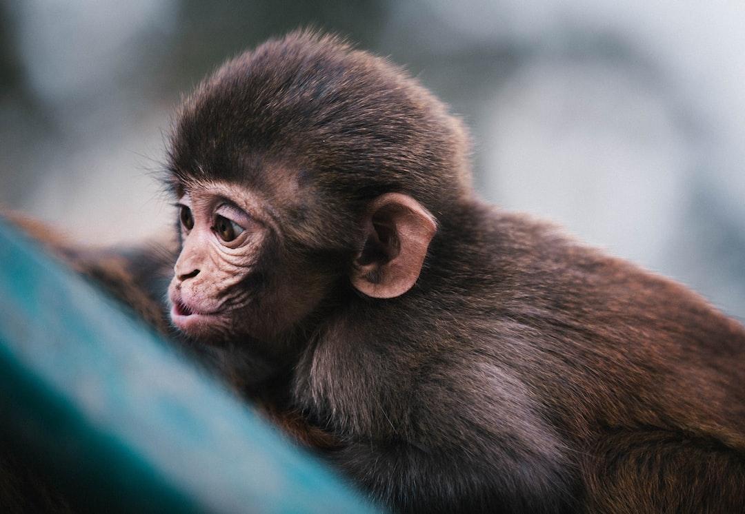 Monkeys in Nepal photo by Martin Jernberg (@martinjphoto ...
