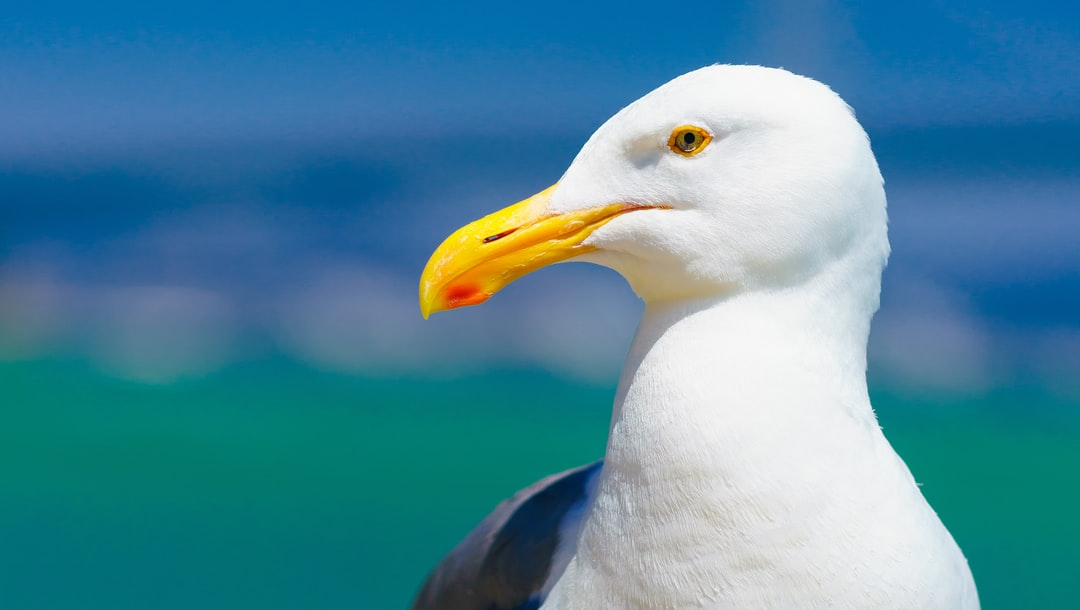 Seagull Profile Pictures | Download Free Images on Unsplash