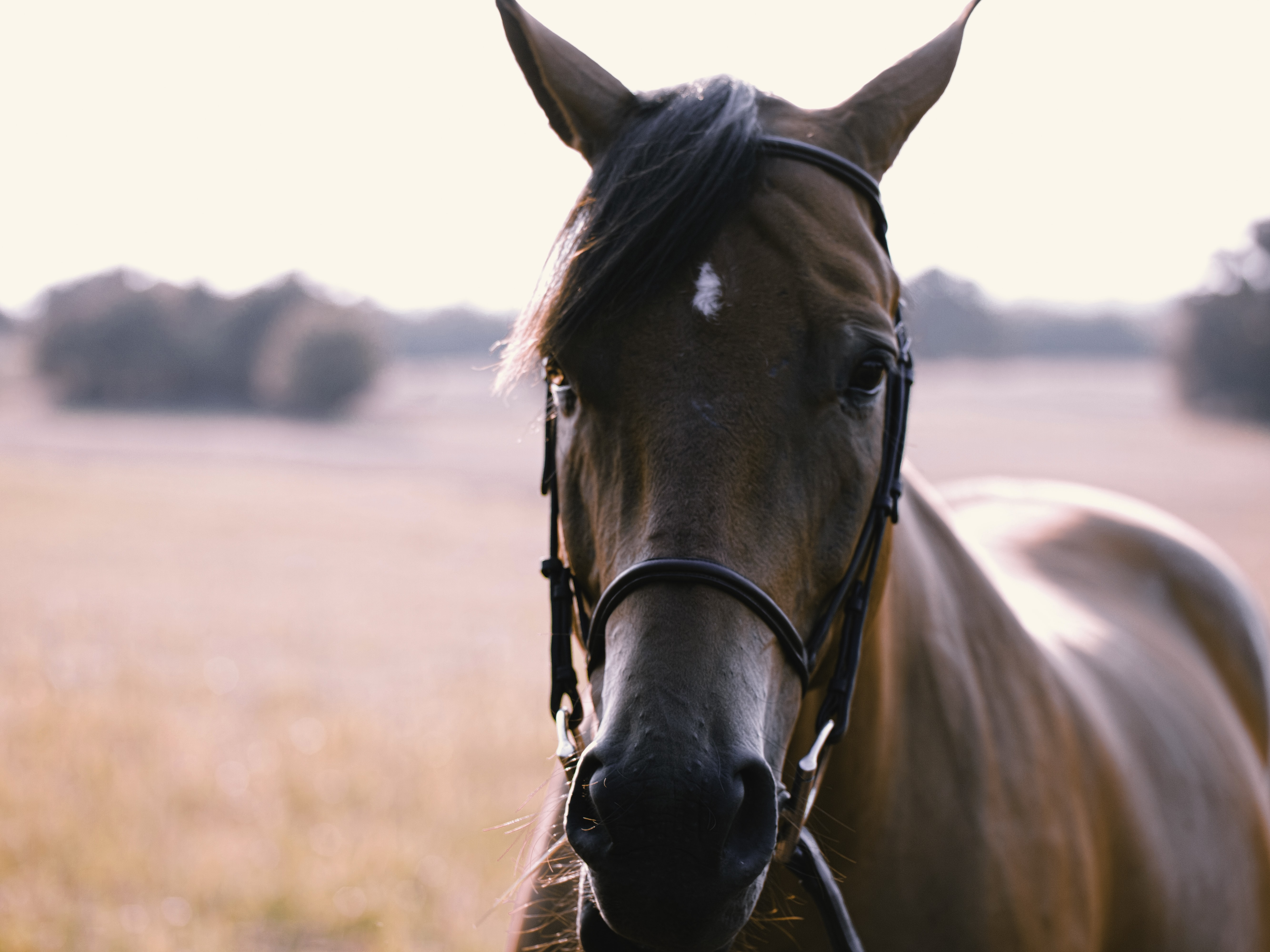 Horse Face Pictures Download Free Images On Unsplash