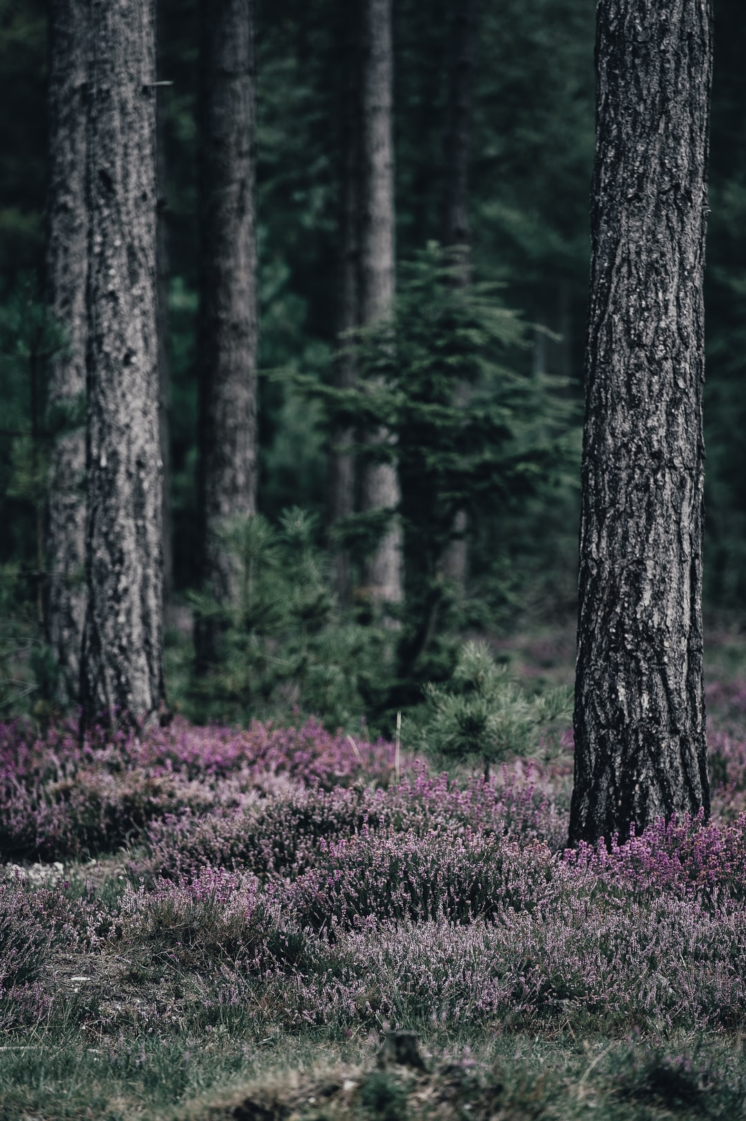 100 Forest Pictures Amp Images Download Free Photos On