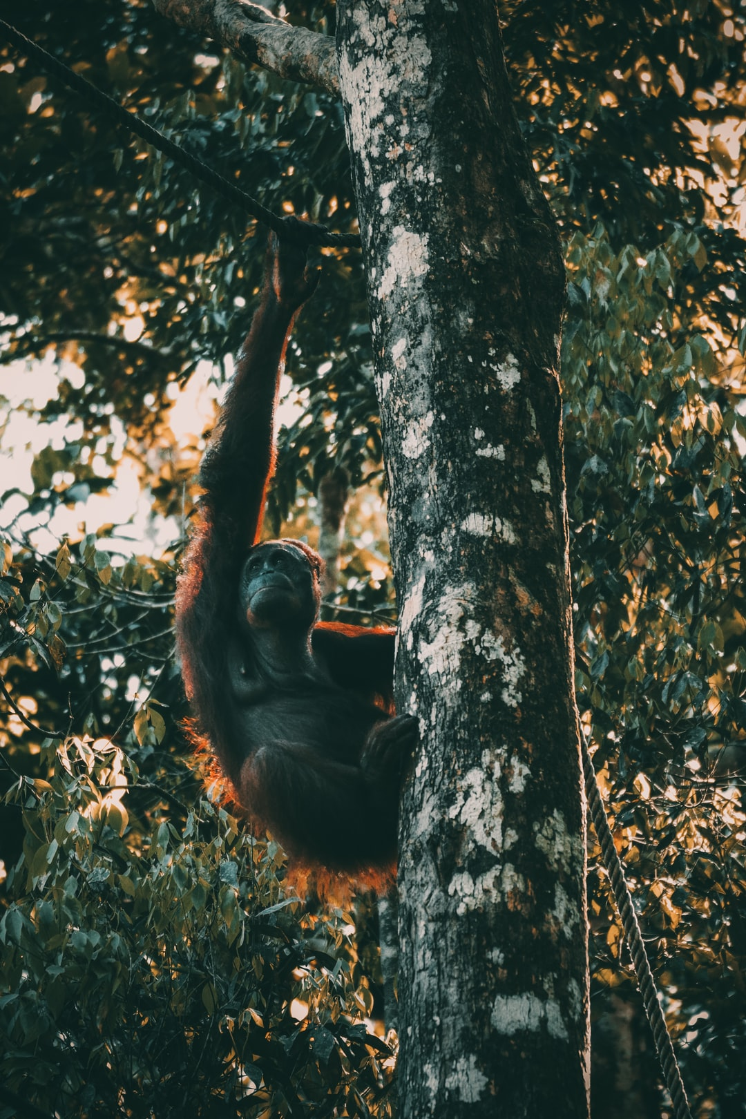 ape pictures download free images on unsplash