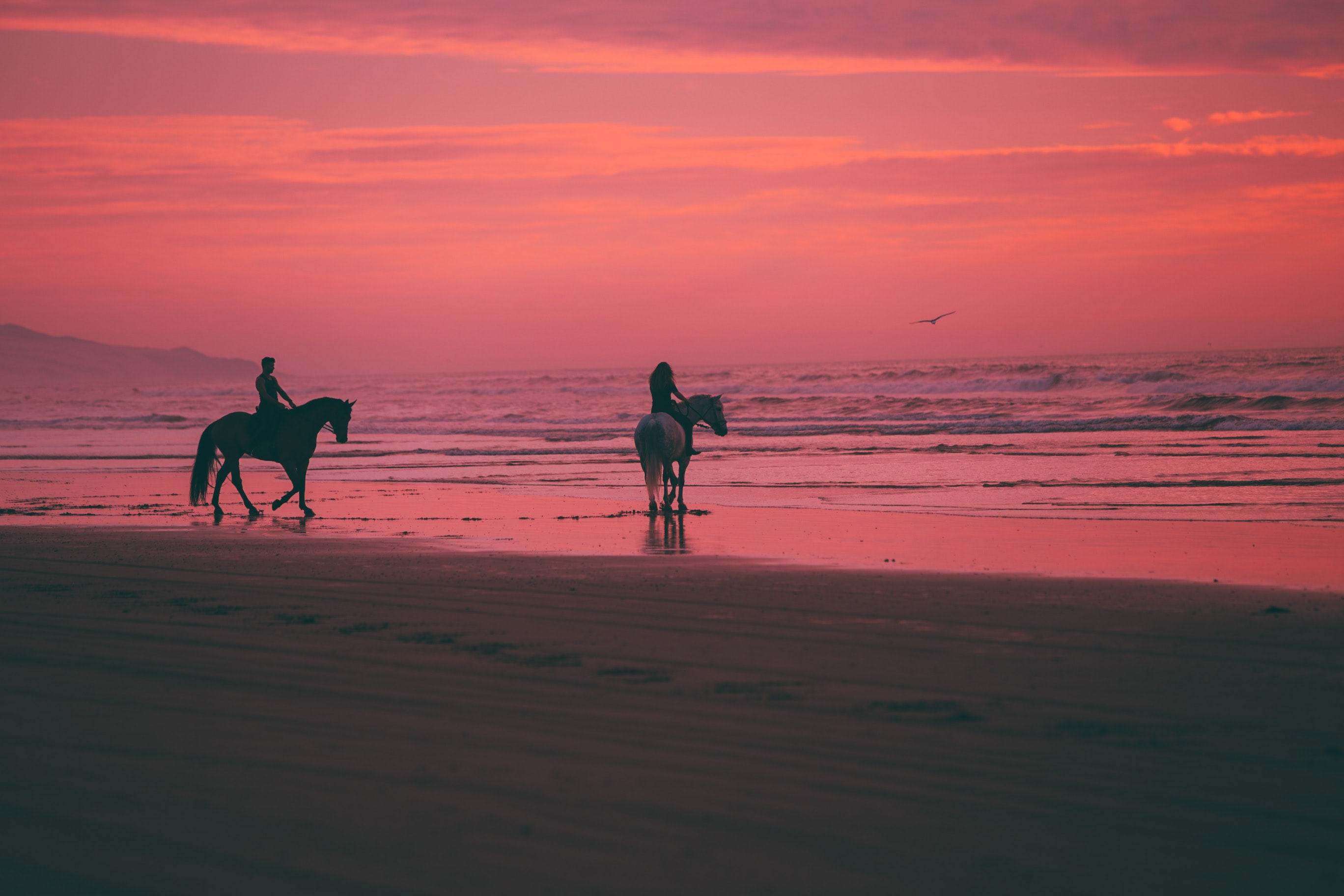 Two Person Riding Horses On Seashore Photo Free Beach Image On Unsplash