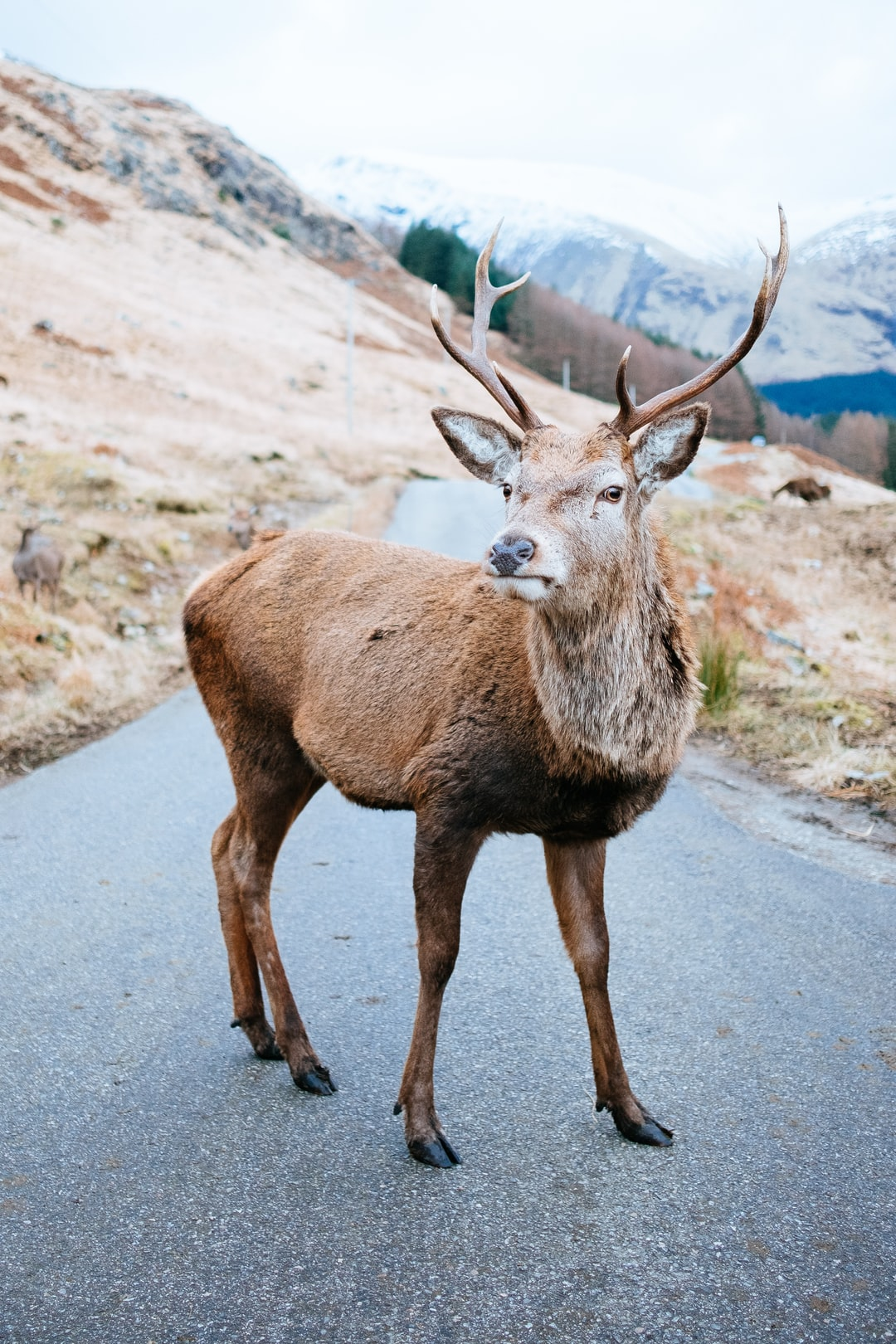 100 deer pictures download free images stock photos on unsplash