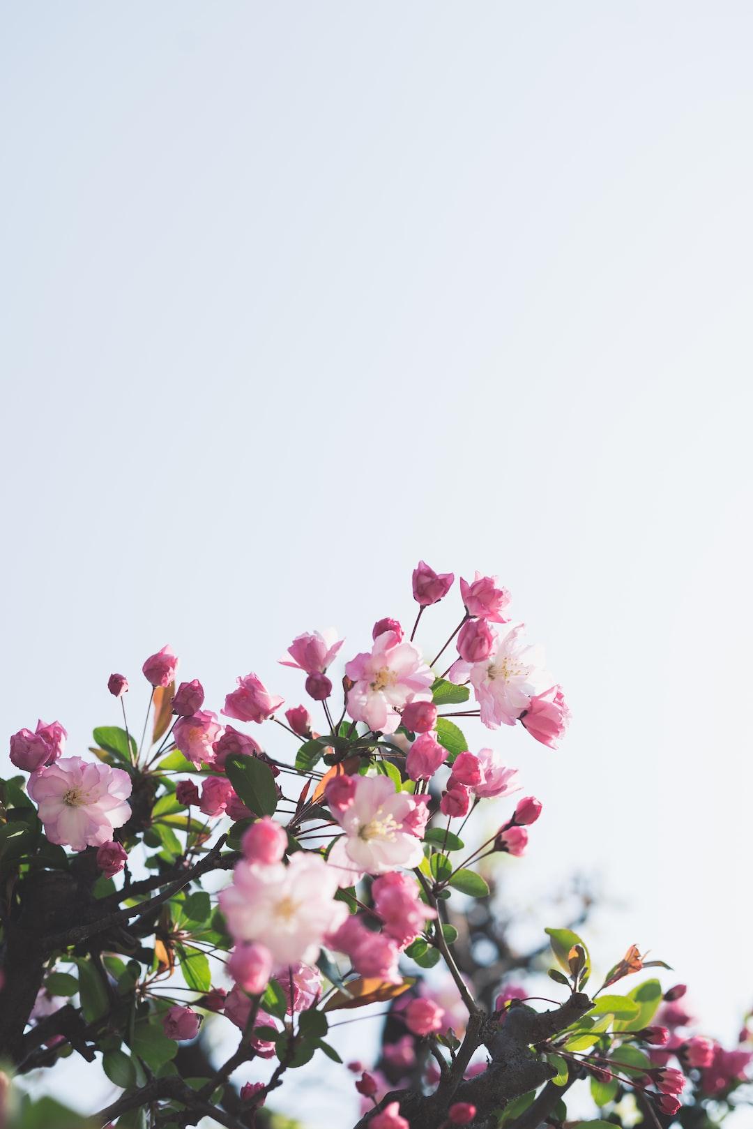Spring Pictures Download Free Images On Unsplash