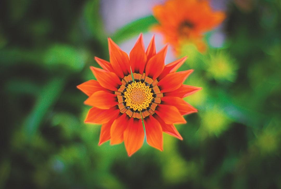 Orange flower pictures download free images on unsplash mightylinksfo