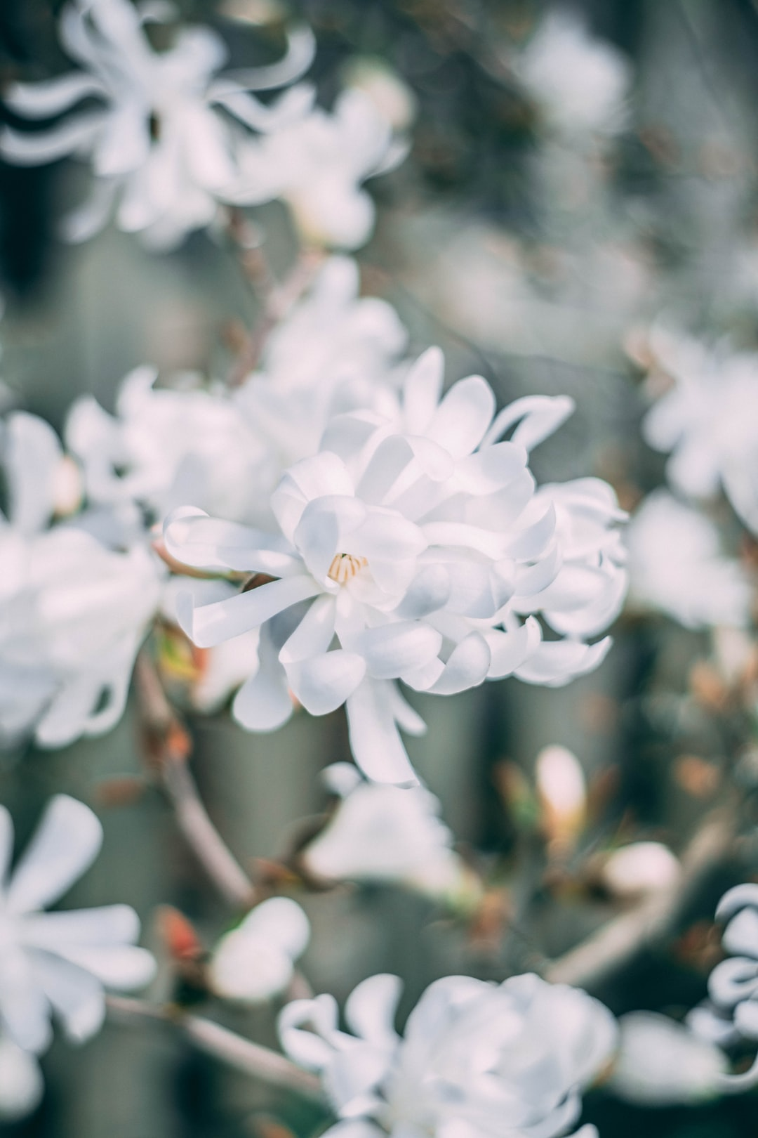 White Flowers Pictures Download Free Images On Unsplash