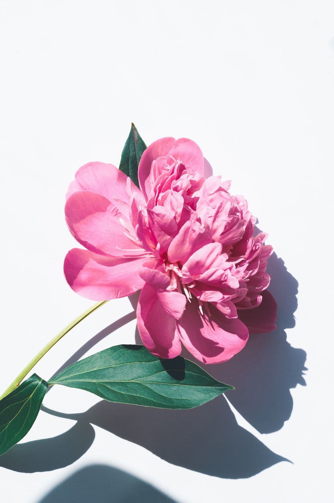 100 Pink Flower Pictures Download Free Images On Unsplash