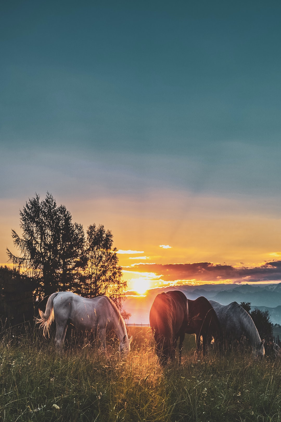 100 Wild Horses Pictures