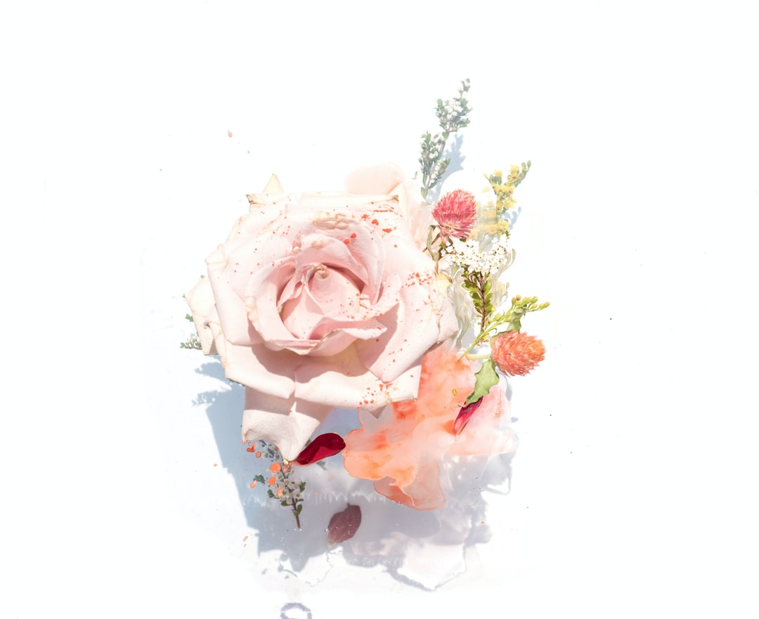 Best 100 Floral Pictures Download Free Images On Unsplash