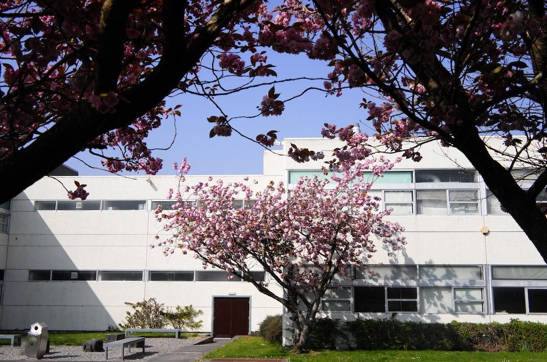 Cherry Blossom Tree Beside House Photo Free Plant Image On Unsplash