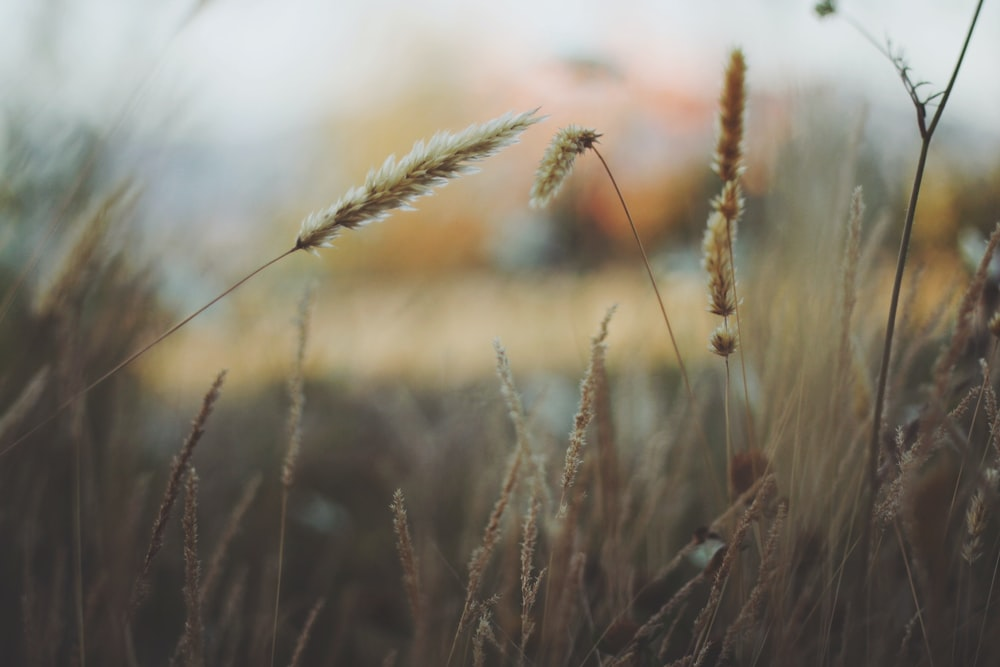 shallow focus photography of brown dried grass