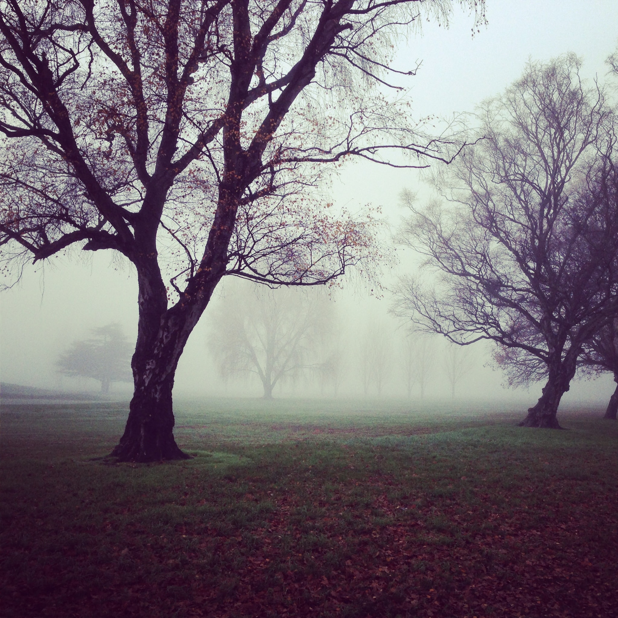 bare trees with fogs