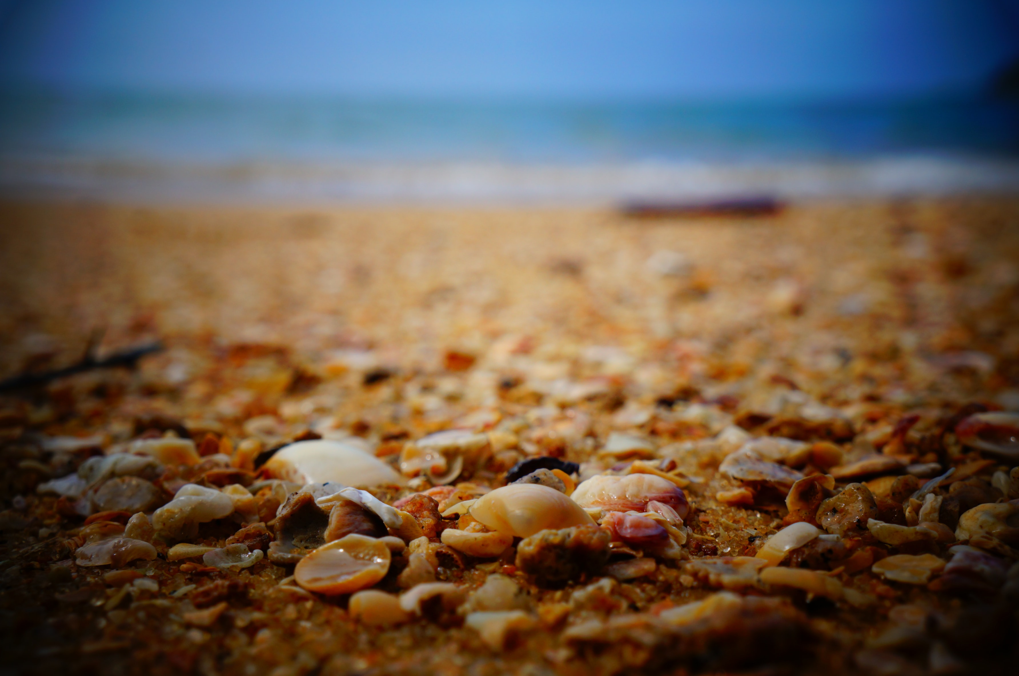 Empty shells in focus on the beach