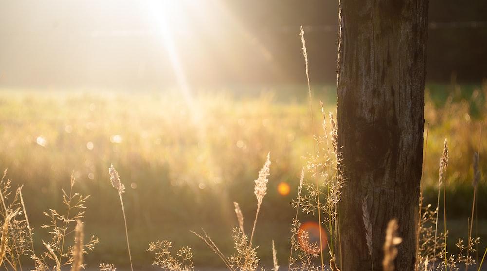 brown tree bark during sunrise