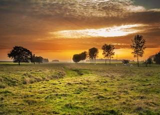lush grass field photo during golden hour