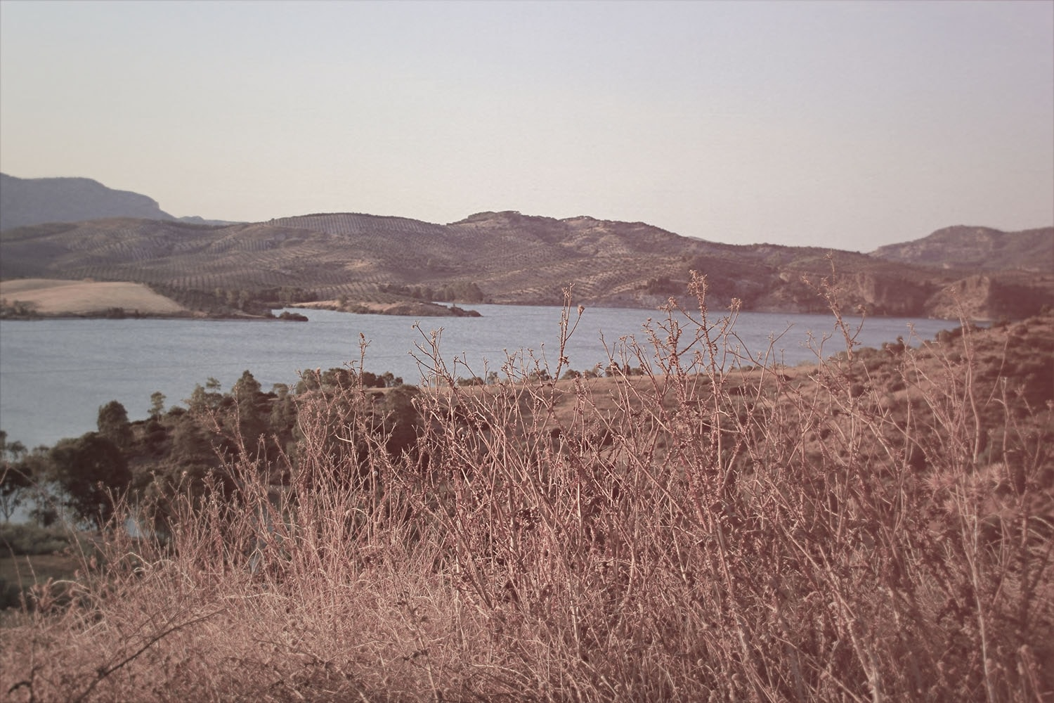 A faded shot of a body of water with dry grass in the foreground