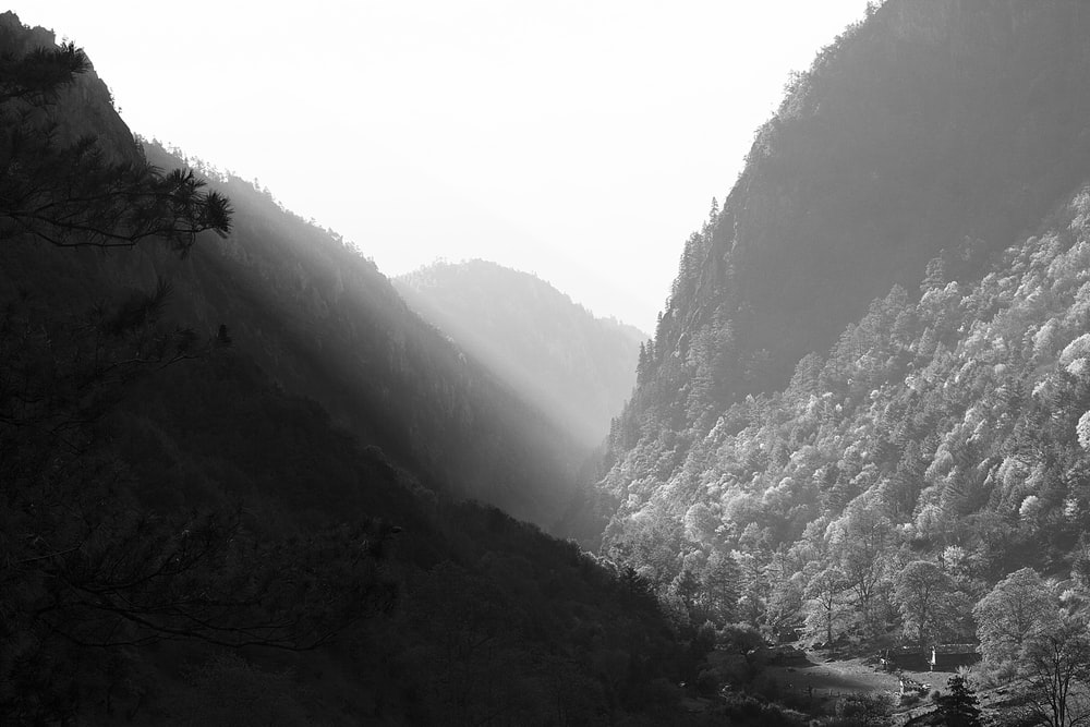 grayscale photography of mountain covered with trees