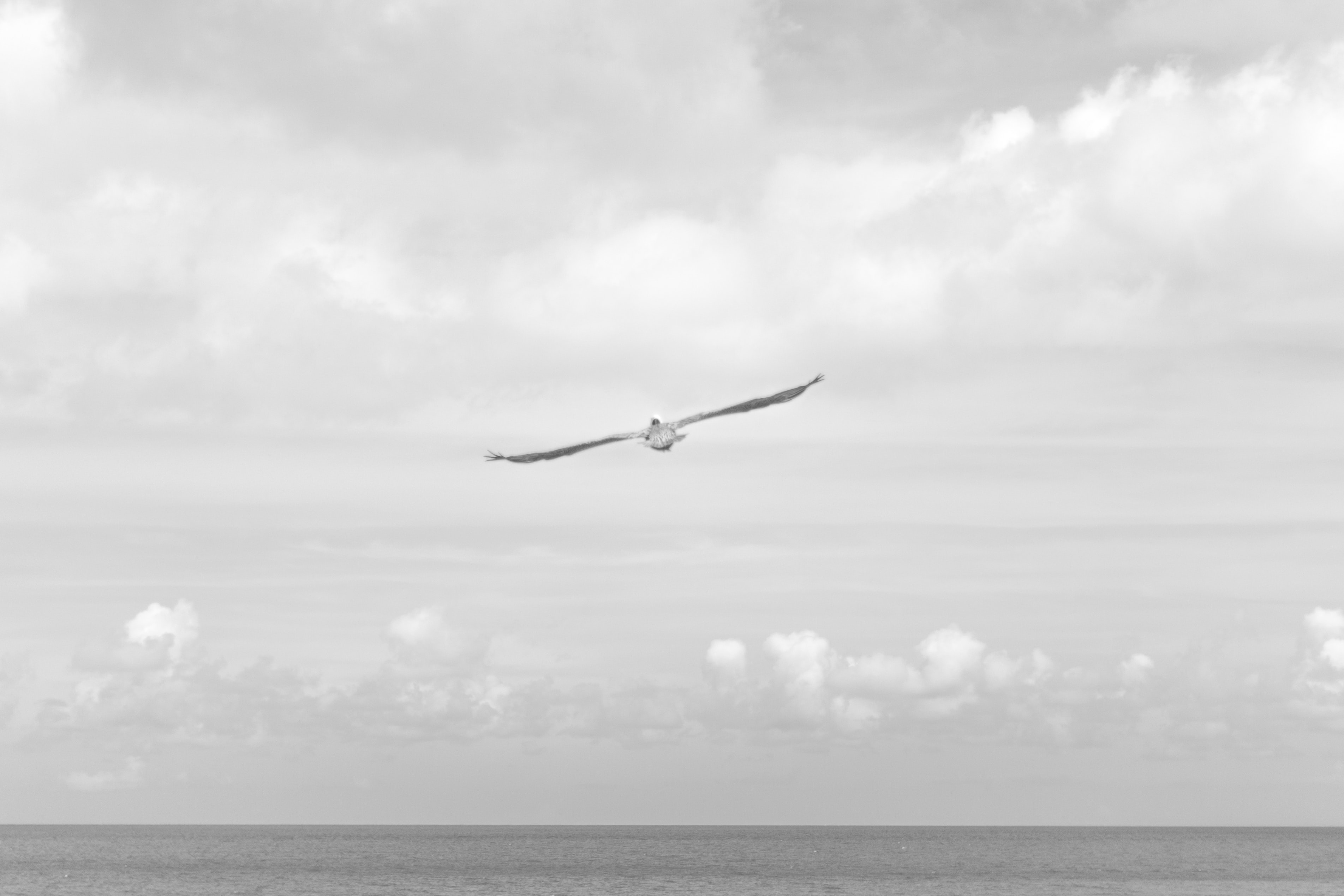 Black and white shot of seagull with full wingspan flying over sea with cloudy sky