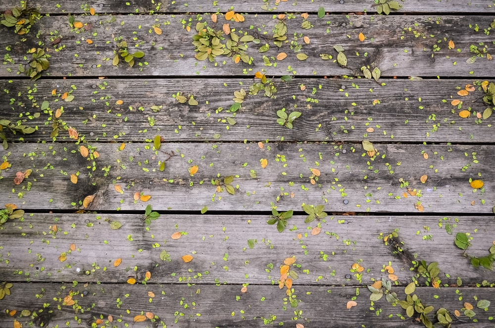 best 100 fall background pictures download free images on unsplash