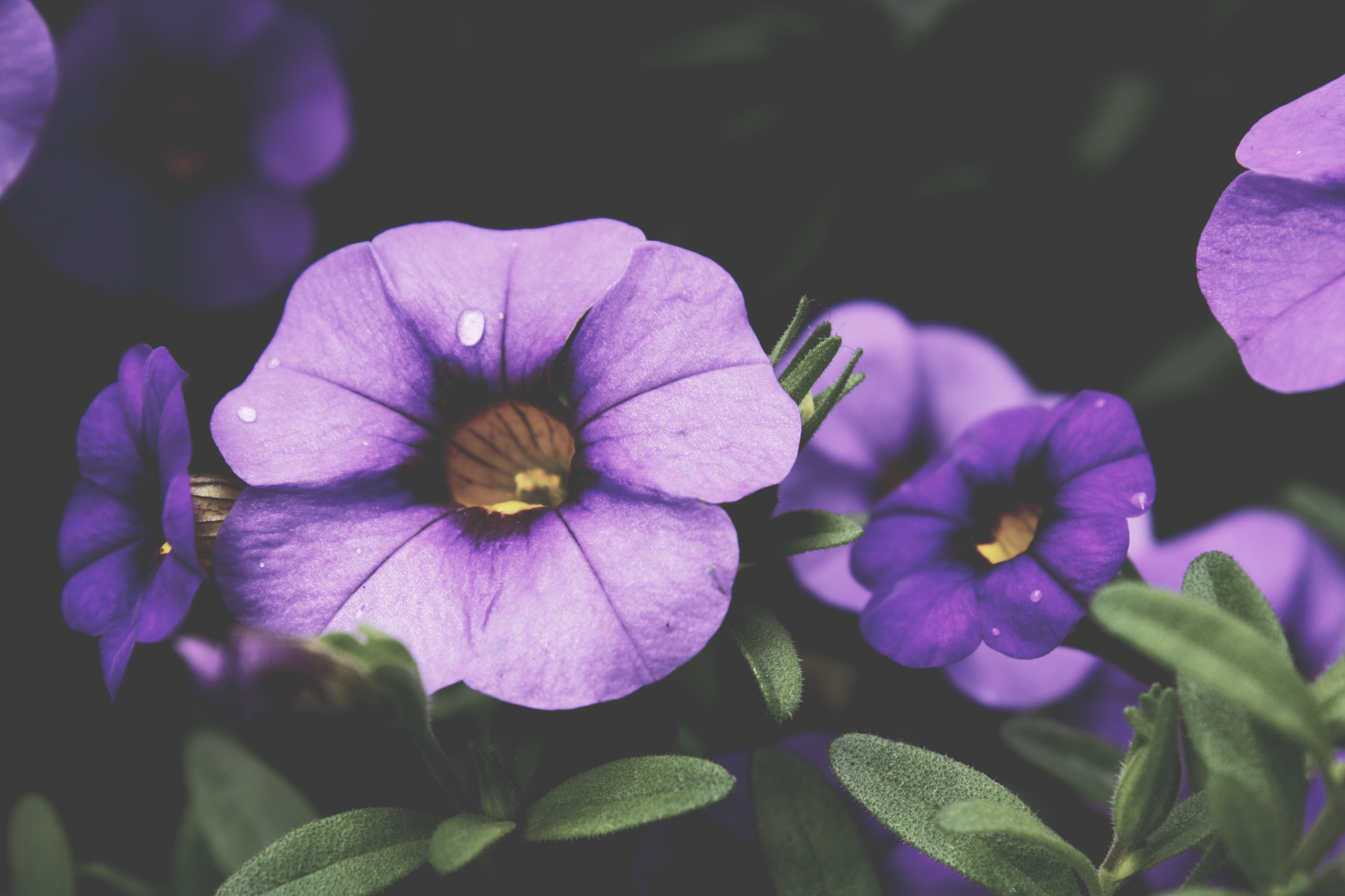 Image Result For B Q Garden Flowers