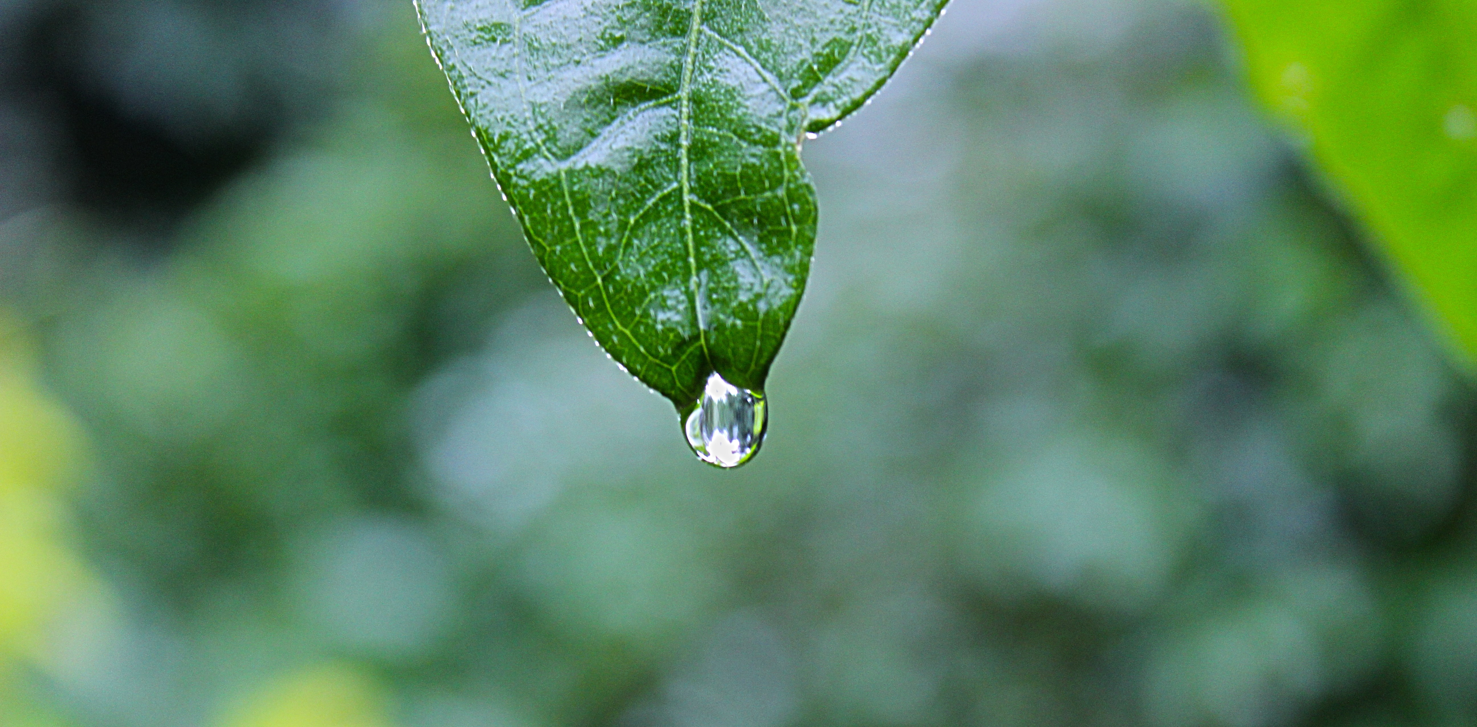 green leaf plant with water drops