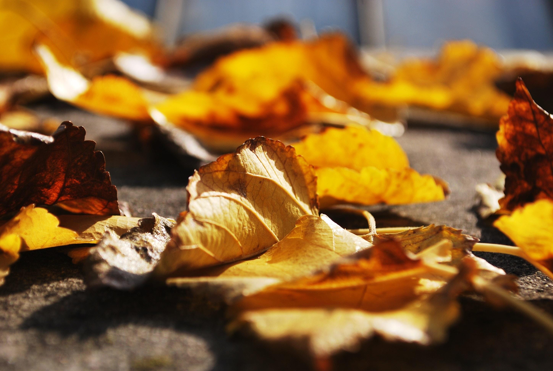tilt shift photo of leaves on the floor