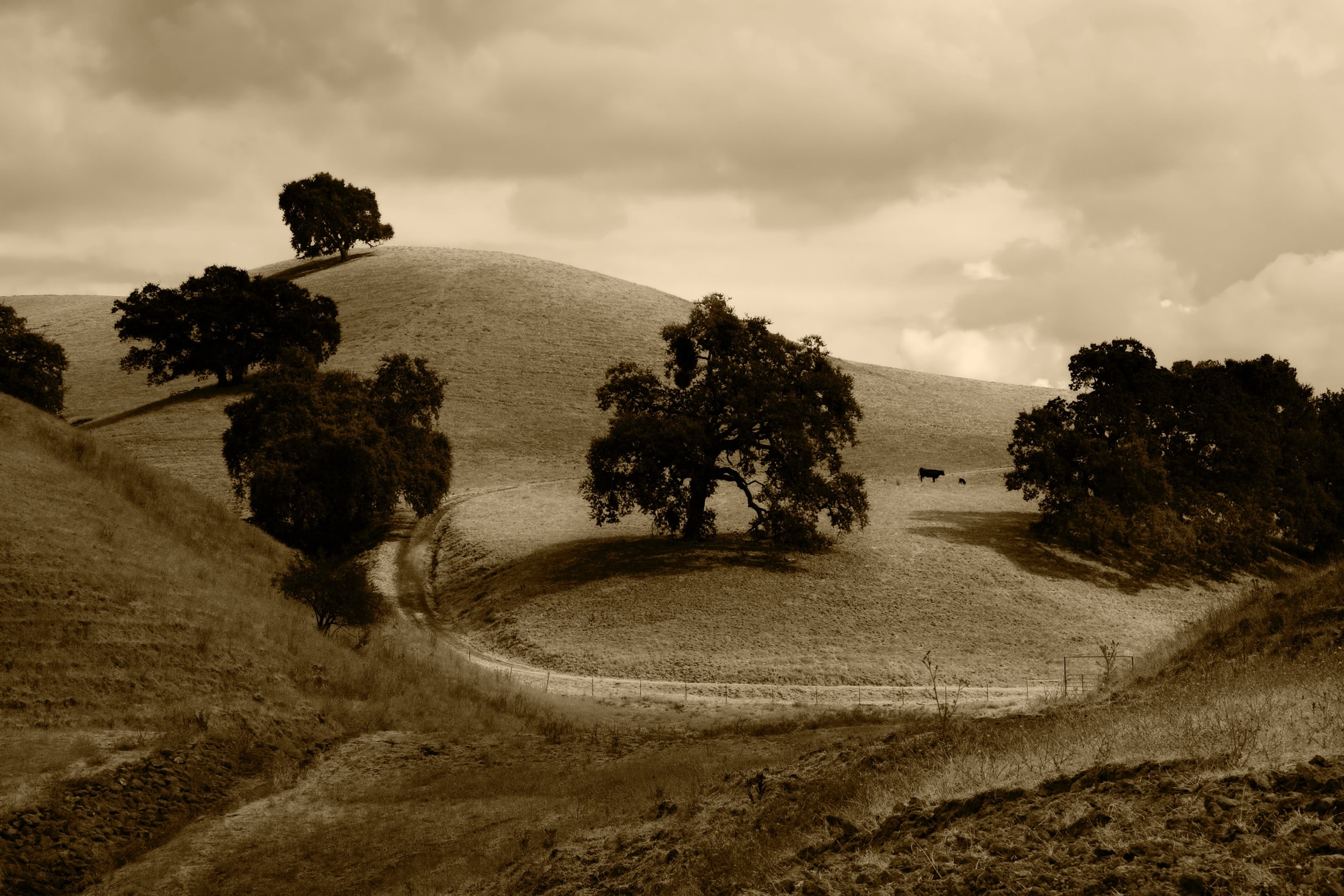 A black-and-white shot of a hilly rural area with cows grazing in the distance