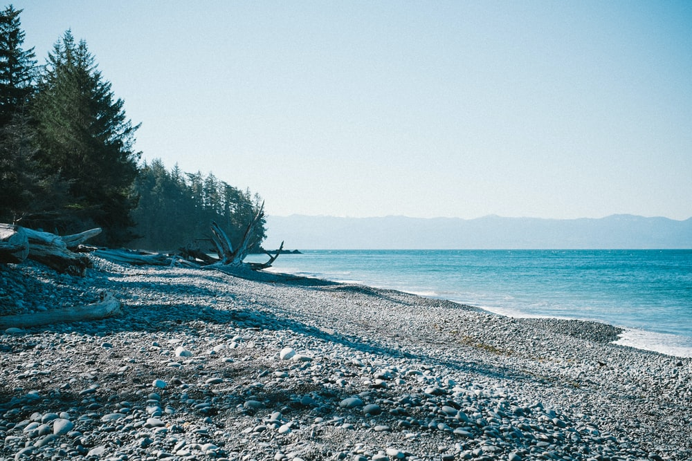 calm water and seashore near trees under white clouds