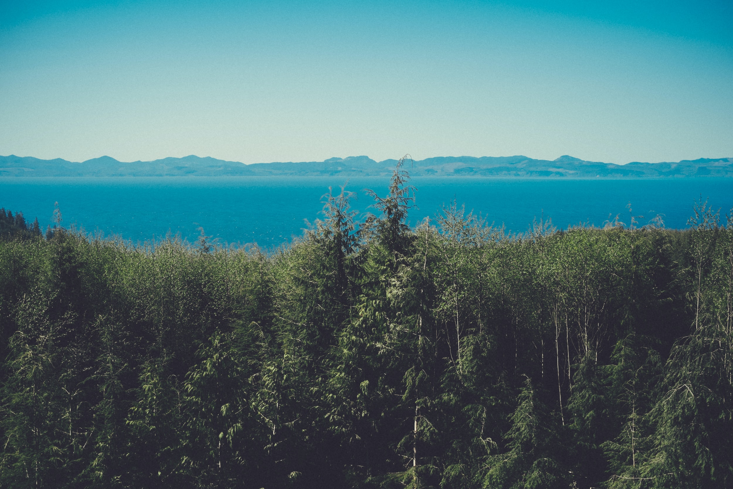 An evergreen forest over azure water with hills on the horizon