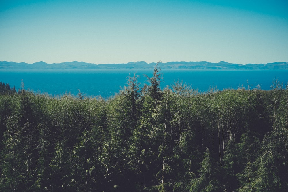 aerial view photography of green trees beside ocean