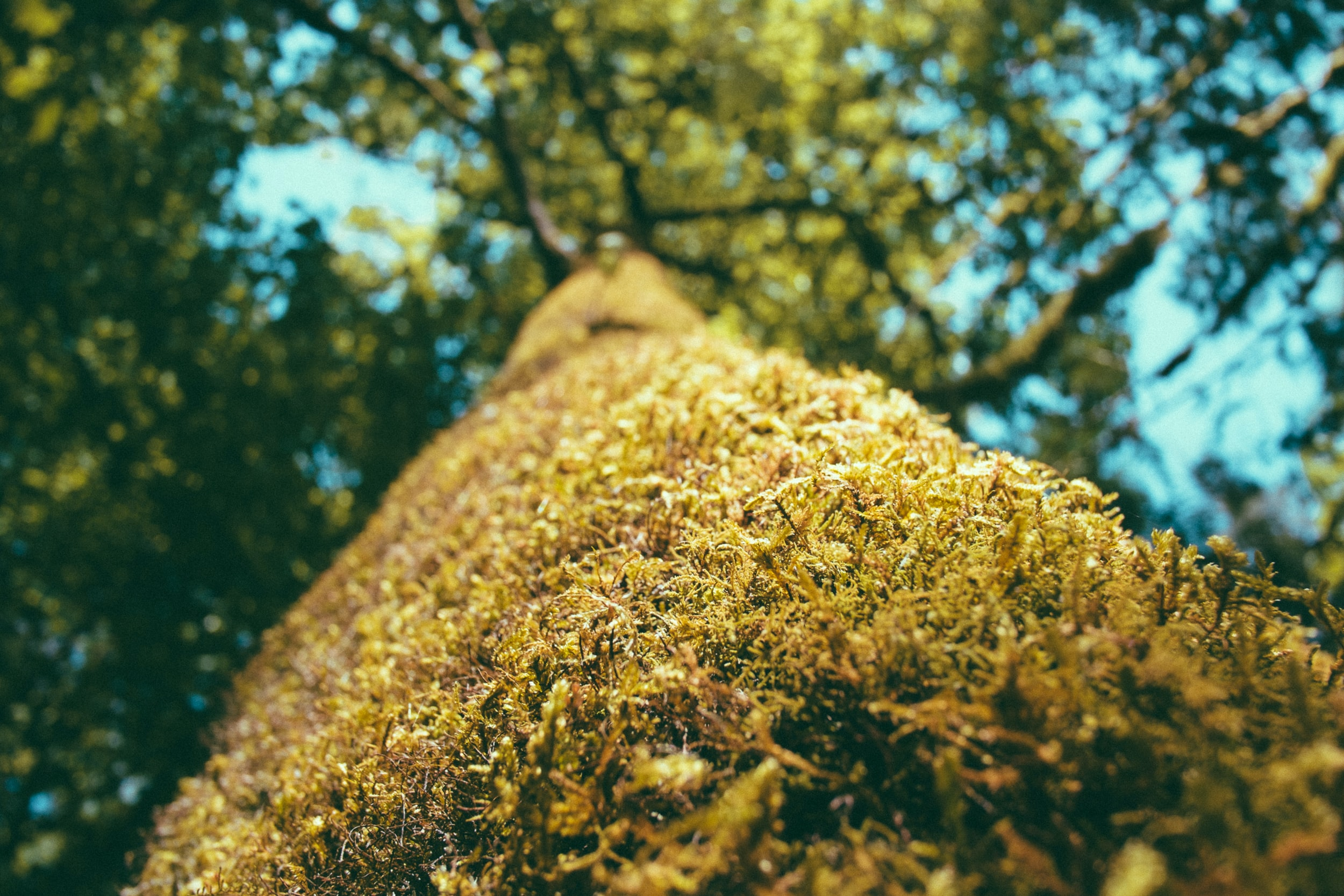 Macro shot of moss growing on a forest tree