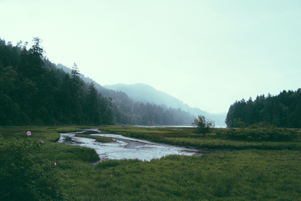 green grassfield