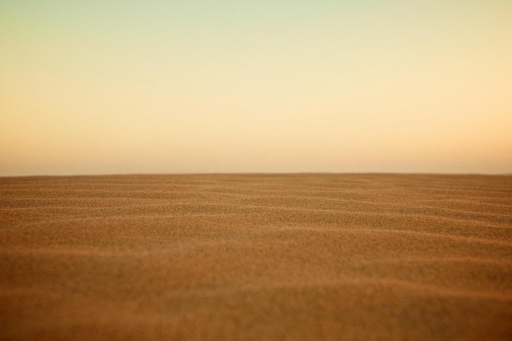 selective focus photography of desert