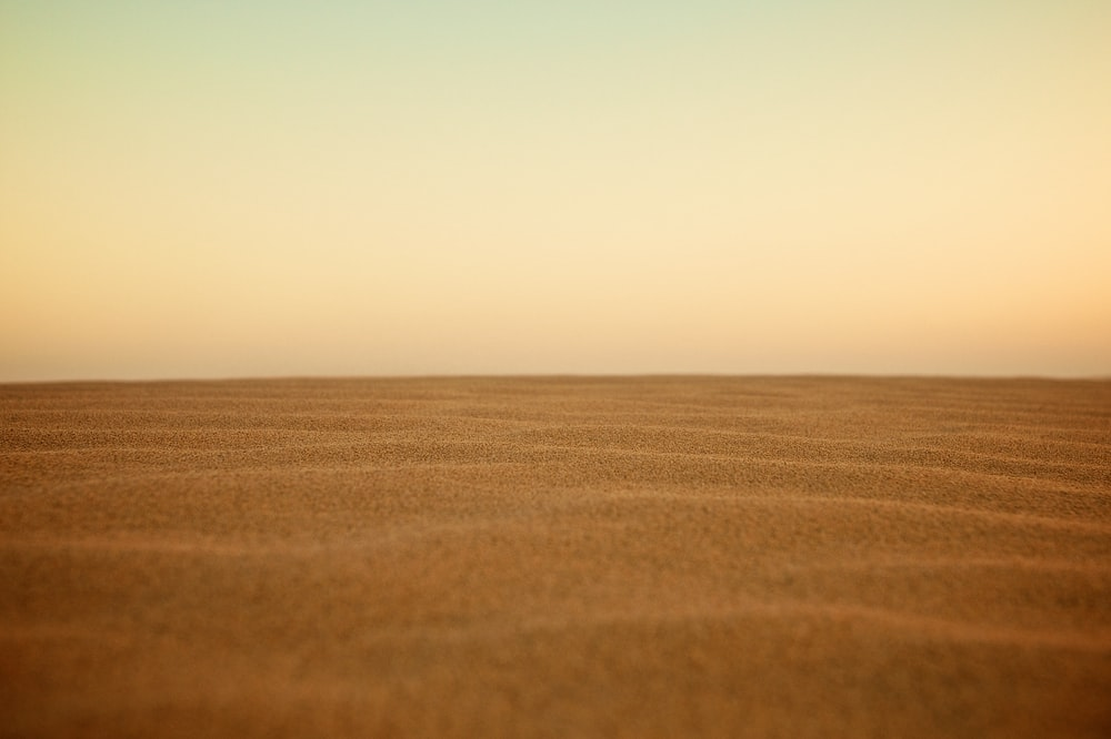 selective focus photography of desert