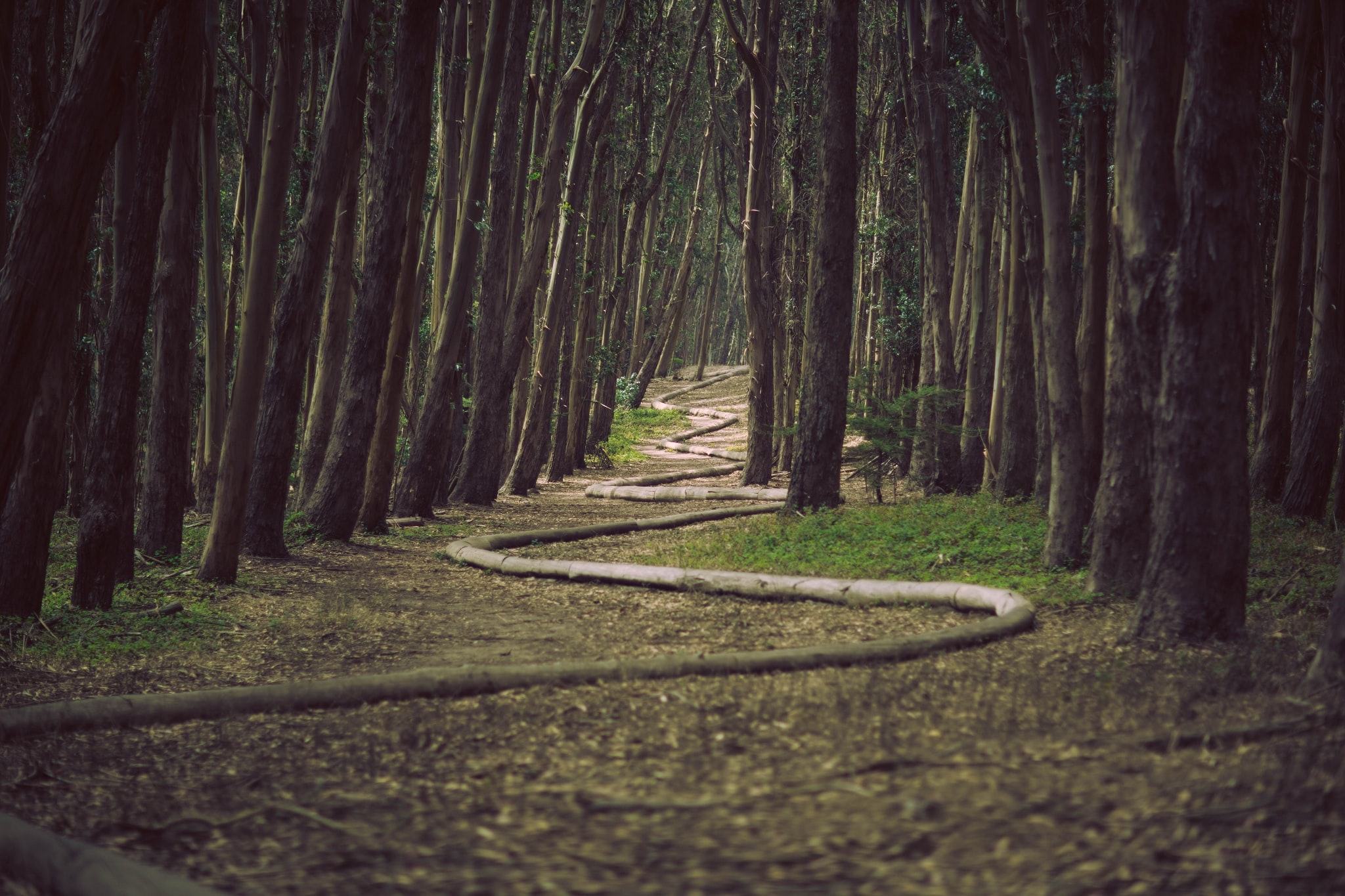 A zig zagging path in between tree trunks in a forest at the Wood Line