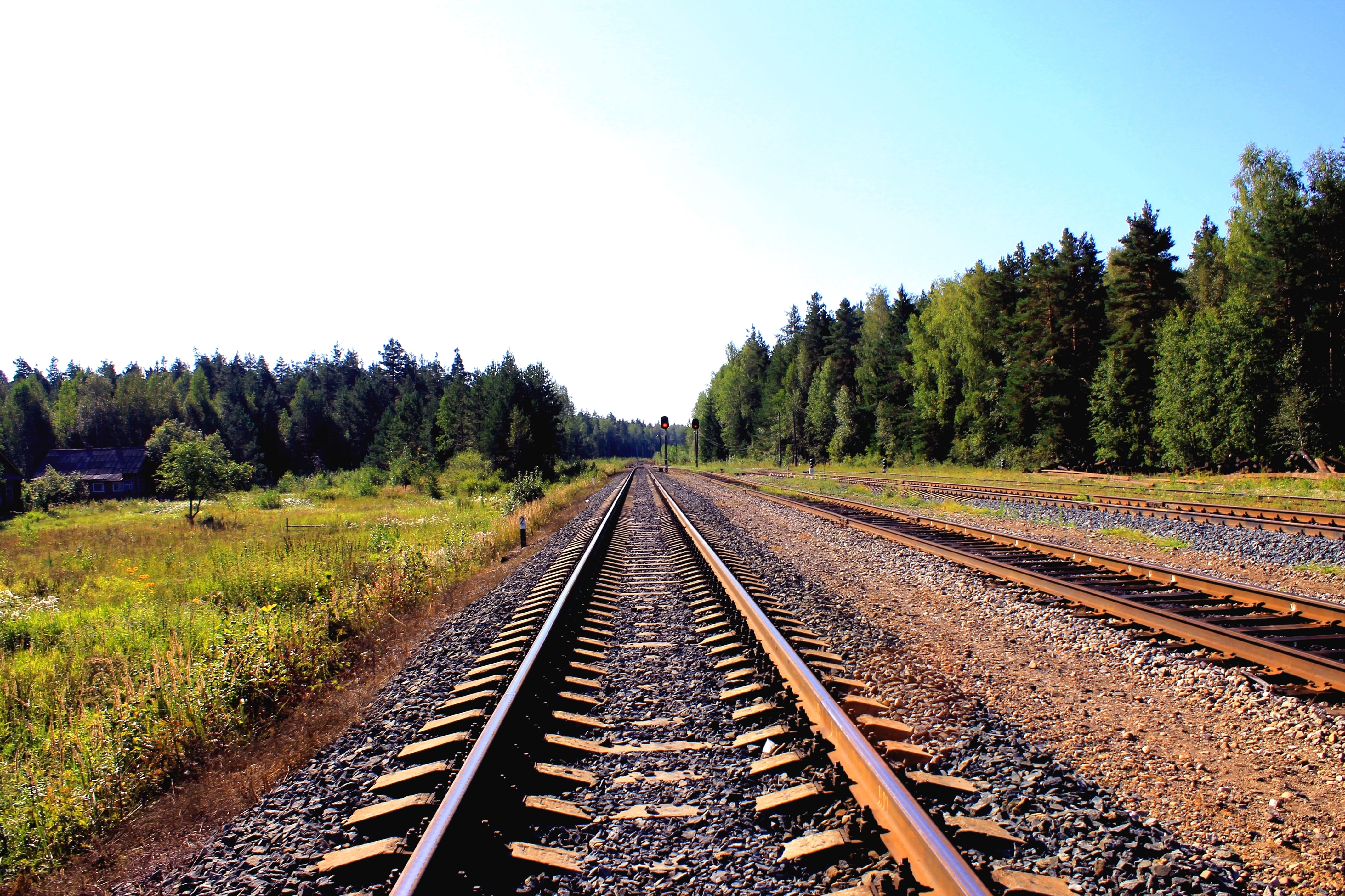 Empty train tracks lined with lush green trees