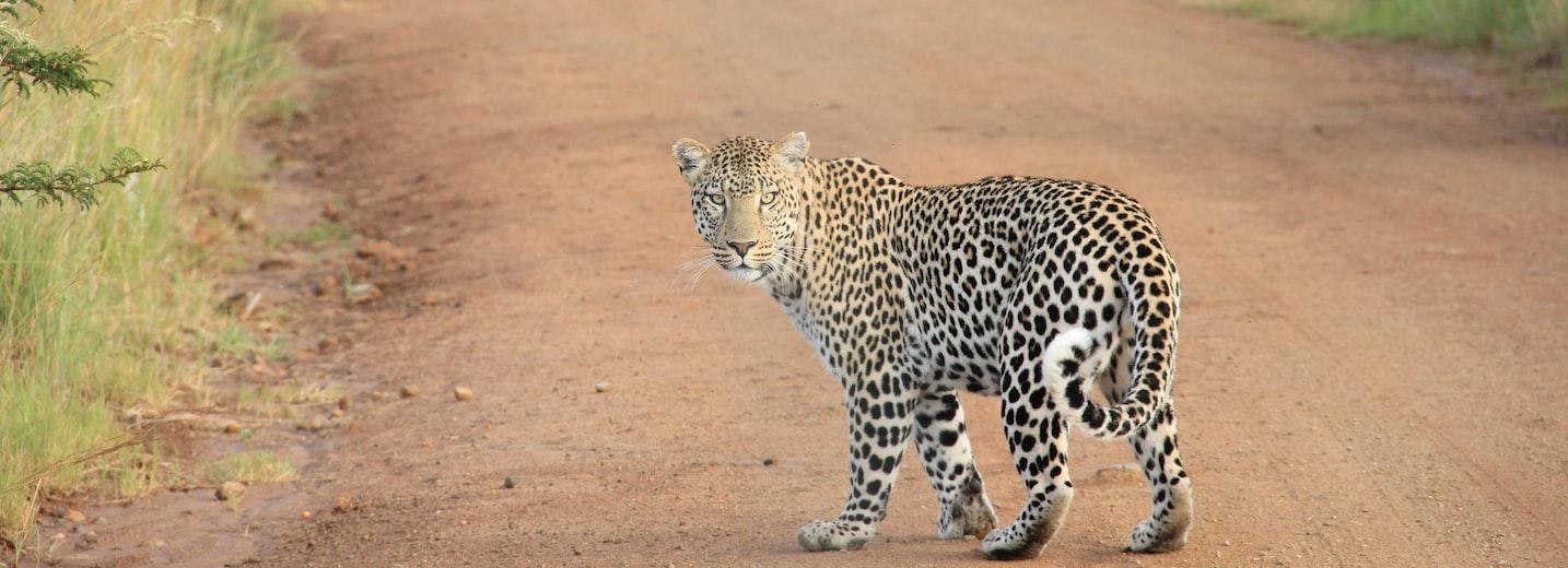 Kenya Branch Tour + Maasai Mara Safari