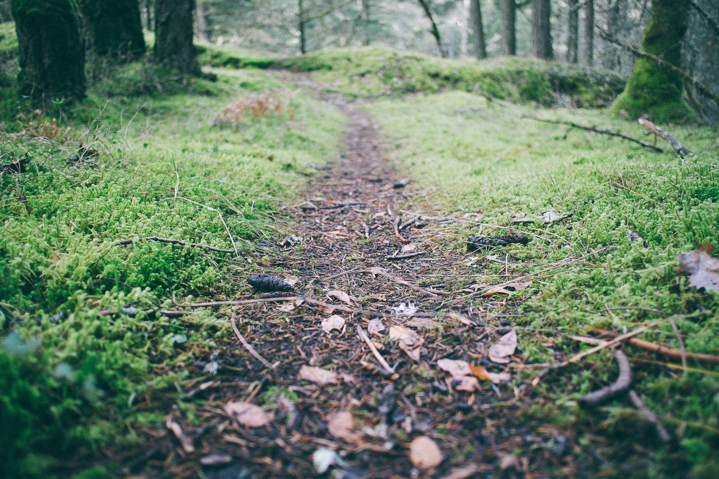 Low shot of a footpath through in a forest