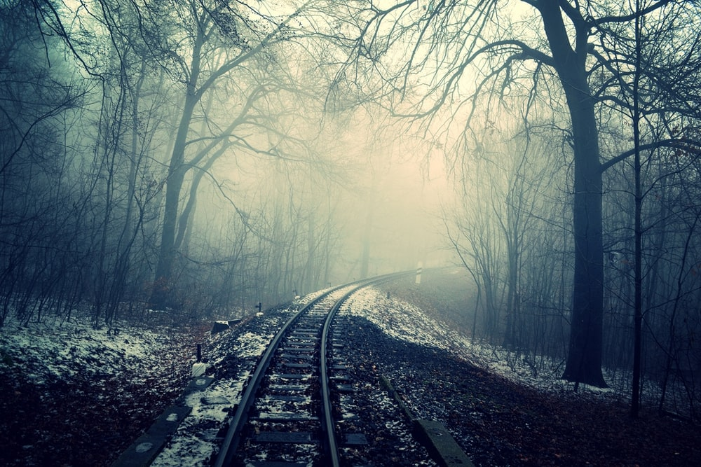 photo of train rail in between of bare trees