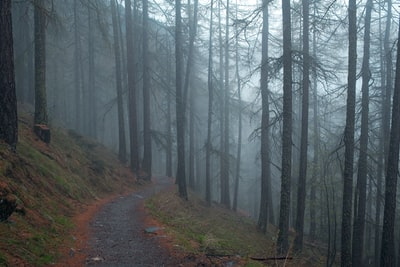 Dirt path in foggy woods