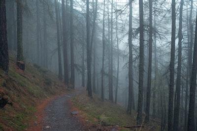 Dirt path in foggy woods