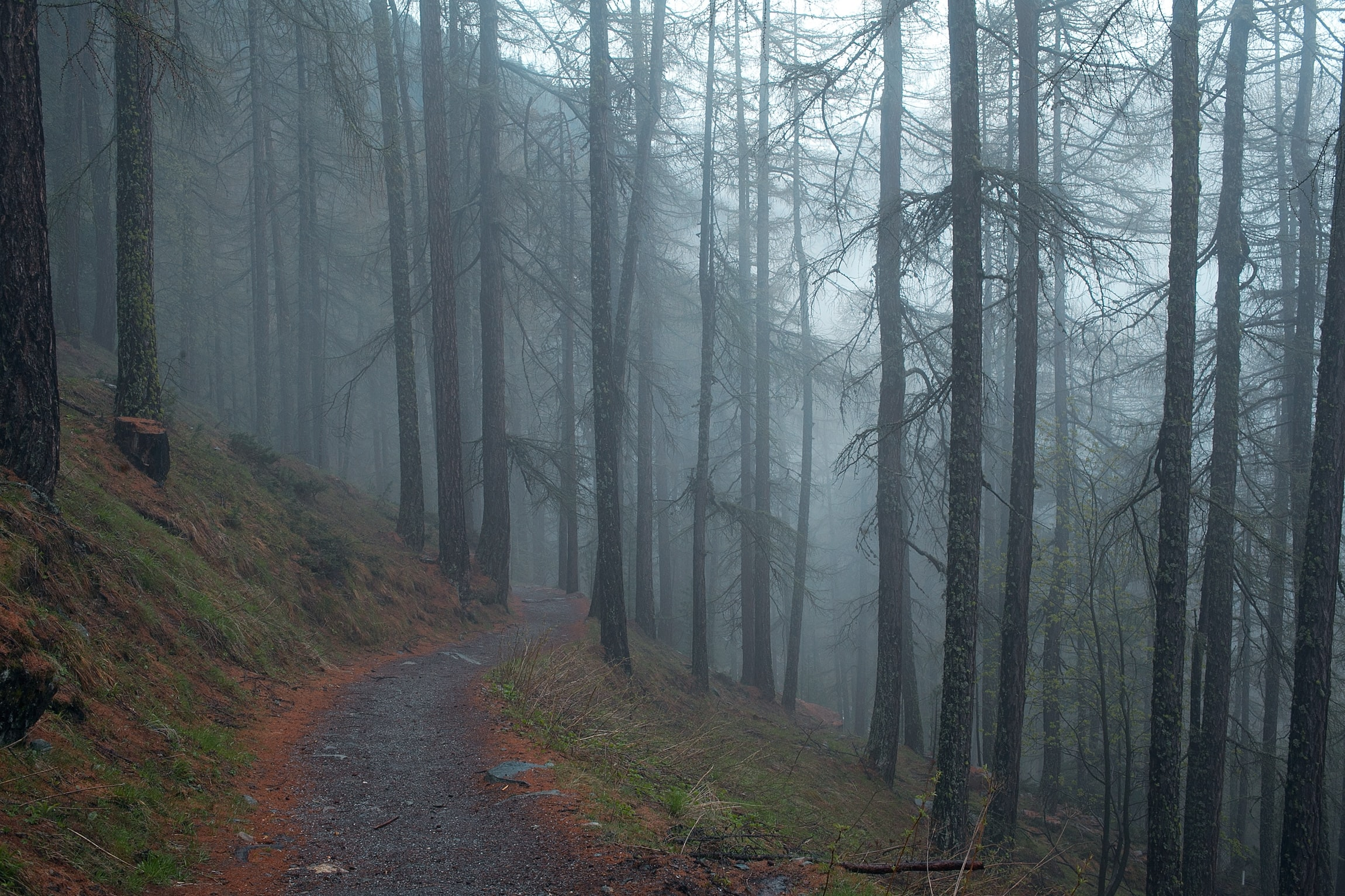 gray road in to the woods with fog at daytime