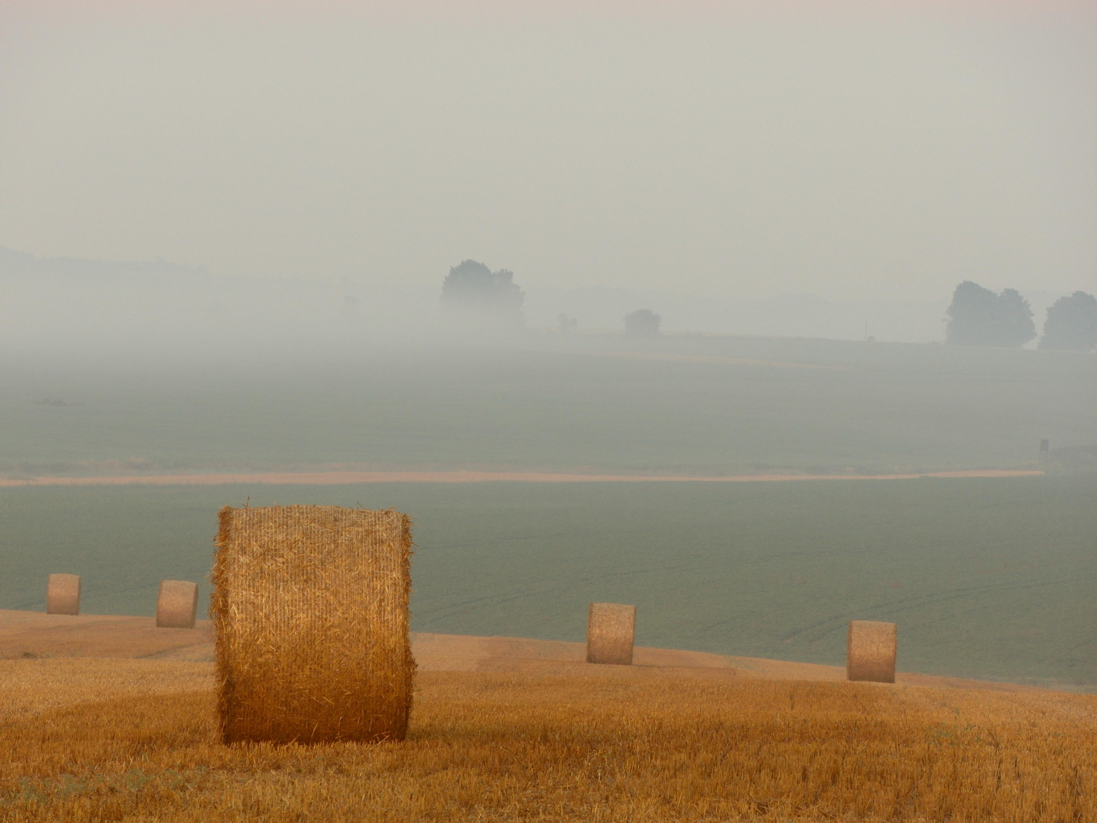 brown hay
