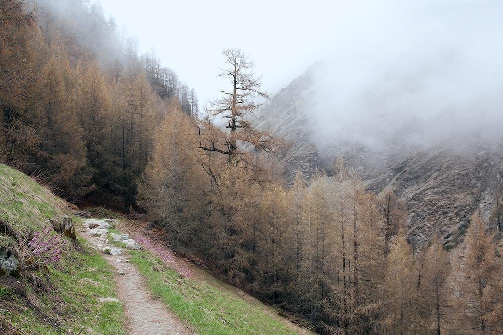 brown leafed tree near mountain