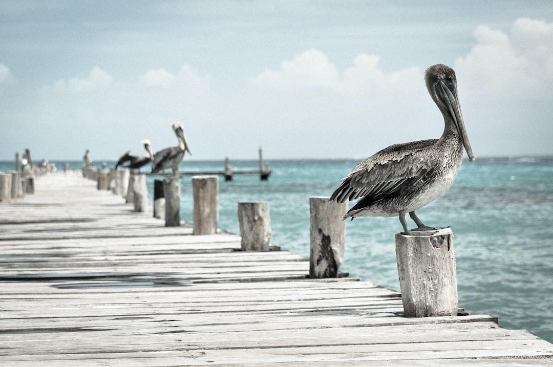 Cormorants on the dock at Dreams Riviera Cancún Resort & Spa.
