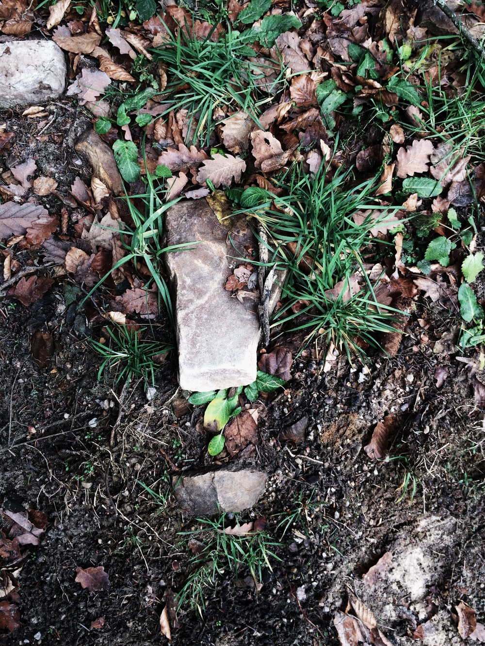 photo of green grass with rocks